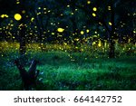 Stock photo firefly flying in the forest fireflies in the bush at night in prachinburi thailand long exposure 664142752