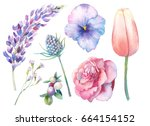 hand painted floral elements... | Shutterstock . vector #664154152