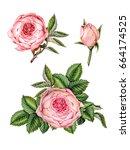 set watercolor illustration of...   Shutterstock . vector #664174525