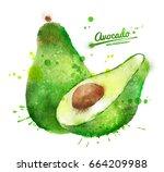 hand drawn watercolor... | Shutterstock . vector #664209988