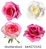 collection of  roses  isolated... | Shutterstock . vector #664272142
