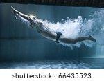 professional swimmer underwater ... | Shutterstock . vector #66435523