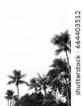 Palm Tree Silhouette  A...