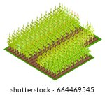 field with growing corn crops... | Shutterstock .eps vector #664469545