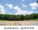 green tree beautiful tropical... | Shutterstock . vector #664511926