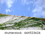 long green ivy around the white ... | Shutterstock . vector #664523626