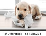 cute labrador retriever puppy... | Shutterstock . vector #664686235