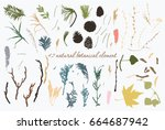 colored natural botany objects. ... | Shutterstock .eps vector #664687942