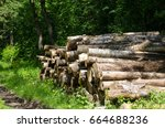 logs in the forest | Shutterstock . vector #664688236