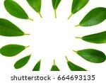 green leaves frame template on... | Shutterstock . vector #664693135