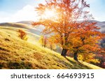 highland vegetation modest... | Shutterstock . vector #664693915