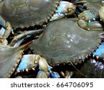 Maryland Blue Crabs  Eastern...