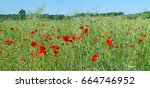 Small photo of Panoramic panel of the summer rape field with the blossoming red poppies, a thistle and blue cornflowers. Sunny June day closeup landscape
