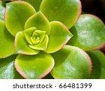Cactus Macro With Vivid Textur...