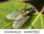 fly | Shutterstock . vector #664819462
