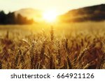 wheat beards with sunrise | Shutterstock . vector #664921126