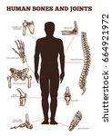 human bones and joints vector... | Shutterstock .eps vector #664921972