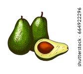 avocado fruit sketch. vector... | Shutterstock .eps vector #664922296