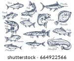 Fishes Sketch Icons Of Tuna ...