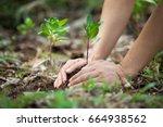 hands of farmer growing and... | Shutterstock . vector #664938562
