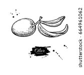 olive branch. hand drawn vector ... | Shutterstock .eps vector #664961062