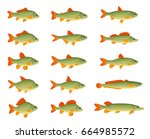 set of various fish on a white... | Shutterstock .eps vector #664985572
