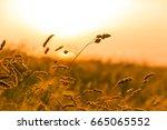 Summer Grass At Sunset