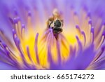 closeup bee looking for honey...   Shutterstock . vector #665174272