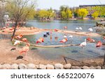 moscow   may 01  2017  flock of ... | Shutterstock . vector #665220076