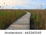boardwalk through the marsh | Shutterstock . vector #665265145