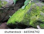 fresh green moss on the rock | Shutterstock . vector #665346742