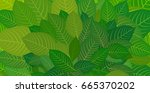 green leaves. background for... | Shutterstock .eps vector #665370202