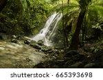 Rainforest Waterfall Flowing In ...
