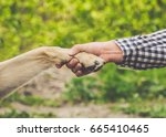 Stock photo a man holds a dog s paw in his hand the concept of friendship and love for animals 665410465