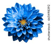 Stock photo surreal dark chrome blue flower dahlia macro isolated on white 665498392
