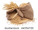 sacks of wheat grains | Shutterstock . vector #66556720