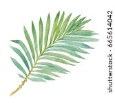 tropical leaf   areca palm.... | Shutterstock . vector #665614042