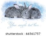 winter rabbits | Shutterstock . vector #66561757