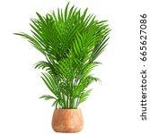 3d digital render of howea... | Shutterstock . vector #665627086