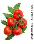 Ripe Tomatoes With Branches And ...