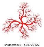 human vein  vessel vector... | Shutterstock .eps vector #665798422