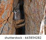 Californian Great Horned Owl I...