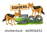 coyotes on the zoo sign... | Shutterstock .eps vector #665856652
