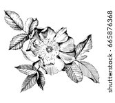 hand drawn botanical art...   Shutterstock .eps vector #665876368