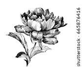 hand drawn botanical art... | Shutterstock .eps vector #665876416
