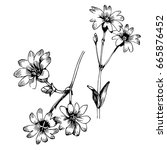 hand drawn botanical art... | Shutterstock .eps vector #665876452