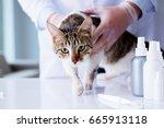 cat visiting vet for regular... | Shutterstock . vector #665913118