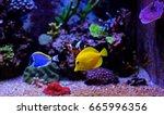 Small photo of aquarium fish tang