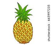 pineapple hand drawn vector... | Shutterstock .eps vector #665997235