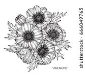 anemone flowers drawing and... | Shutterstock .eps vector #666049765